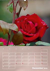 Zarte Schönheiten - Rosen (Wandkalender 2019 DIN A2 hoch) - Produktdetailbild 12