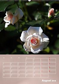 Zarte Schönheiten - Rosen (Wandkalender 2019 DIN A2 hoch) - Produktdetailbild 8