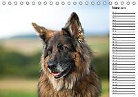 Zauberhafte Langhaar Schäferhunde (Tischkalender 2019 DIN A5 quer) - Produktdetailbild 3
