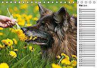 Zauberhafte Langhaar Schäferhunde (Tischkalender 2019 DIN A5 quer) - Produktdetailbild 5