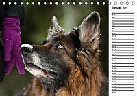 Zauberhafte Langhaar Schäferhunde (Tischkalender 2019 DIN A5 quer) - Produktdetailbild 1