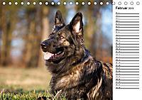 Zauberhafte Langhaar Schäferhunde (Tischkalender 2019 DIN A5 quer) - Produktdetailbild 2