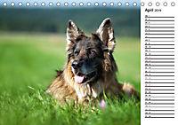 Zauberhafte Langhaar Schäferhunde (Tischkalender 2019 DIN A5 quer) - Produktdetailbild 4