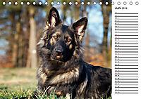 Zauberhafte Langhaar Schäferhunde (Tischkalender 2019 DIN A5 quer) - Produktdetailbild 6