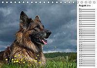 Zauberhafte Langhaar Schäferhunde (Tischkalender 2019 DIN A5 quer) - Produktdetailbild 8