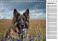 Zauberhafte Langhaar Schäferhunde (Tischkalender 2019 DIN A5 quer) - Produktdetailbild 9