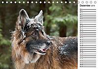 Zauberhafte Langhaar Schäferhunde (Tischkalender 2019 DIN A5 quer) - Produktdetailbild 12