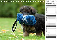 Zauberhafte Langhaar Schäferhunde (Tischkalender 2019 DIN A5 quer) - Produktdetailbild 11