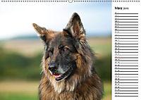 Zauberhafte Langhaar Schäferhunde (Wandkalender 2019 DIN A2 quer) - Produktdetailbild 3