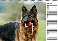Zauberhafte Langhaar Schäferhunde (Wandkalender 2019 DIN A2 quer) - Produktdetailbild 7