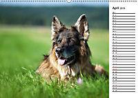 Zauberhafte Langhaar Schäferhunde (Wandkalender 2019 DIN A2 quer) - Produktdetailbild 4