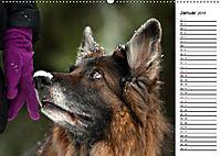 Zauberhafte Langhaar Schäferhunde (Wandkalender 2019 DIN A2 quer) - Produktdetailbild 1