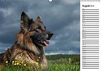 Zauberhafte Langhaar Schäferhunde (Wandkalender 2019 DIN A2 quer) - Produktdetailbild 8