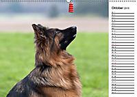 Zauberhafte Langhaar Schäferhunde (Wandkalender 2019 DIN A2 quer) - Produktdetailbild 10