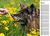 Zauberhafte Langhaar Schäferhunde (Wandkalender 2019 DIN A2 quer) - Produktdetailbild 5