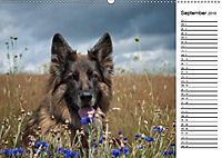 Zauberhafte Langhaar Schäferhunde (Wandkalender 2019 DIN A2 quer) - Produktdetailbild 9