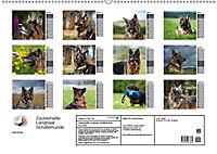 Zauberhafte Langhaar Schäferhunde (Wandkalender 2019 DIN A2 quer) - Produktdetailbild 13