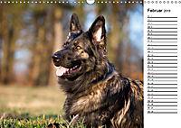 Zauberhafte Langhaar Schäferhunde (Wandkalender 2019 DIN A3 quer) - Produktdetailbild 2