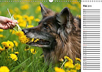 Zauberhafte Langhaar Schäferhunde (Wandkalender 2019 DIN A3 quer) - Produktdetailbild 5