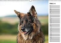 Zauberhafte Langhaar Schäferhunde (Wandkalender 2019 DIN A3 quer) - Produktdetailbild 3