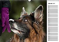Zauberhafte Langhaar Schäferhunde (Wandkalender 2019 DIN A3 quer) - Produktdetailbild 1