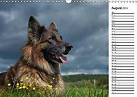 Zauberhafte Langhaar Schäferhunde (Wandkalender 2019 DIN A3 quer) - Produktdetailbild 8