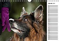 Zauberhafte Langhaar Schäferhunde (Wandkalender 2019 DIN A4 quer) - Produktdetailbild 1