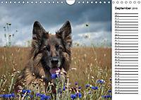 Zauberhafte Langhaar Schäferhunde (Wandkalender 2019 DIN A4 quer) - Produktdetailbild 9