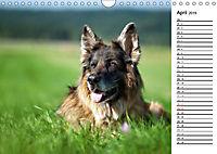 Zauberhafte Langhaar Schäferhunde (Wandkalender 2019 DIN A4 quer) - Produktdetailbild 4