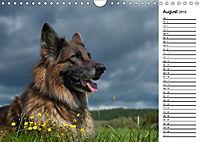 Zauberhafte Langhaar Schäferhunde (Wandkalender 2019 DIN A4 quer) - Produktdetailbild 8