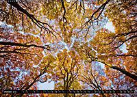 Zauberhafter Sachsenwald (Wandkalender 2019 DIN A2 quer) - Produktdetailbild 10