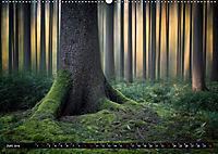 Zauberhafter Sachsenwald (Wandkalender 2019 DIN A2 quer) - Produktdetailbild 6