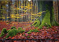 Zauberhafter Sachsenwald (Wandkalender 2019 DIN A3 quer) - Produktdetailbild 4