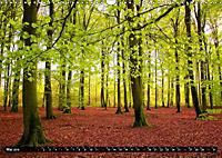 Zauberhafter Sachsenwald (Wandkalender 2019 DIN A3 quer) - Produktdetailbild 5