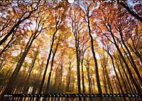 Zauberhafter Sachsenwald (Wandkalender 2019 DIN A3 quer) - Produktdetailbild 7