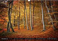 Zauberhafter Sachsenwald (Wandkalender 2019 DIN A3 quer) - Produktdetailbild 11