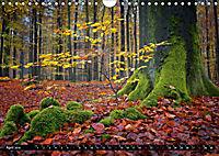 Zauberhafter Sachsenwald (Wandkalender 2019 DIN A4 quer) - Produktdetailbild 4