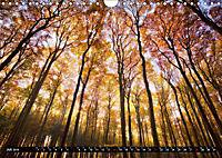 Zauberhafter Sachsenwald (Wandkalender 2019 DIN A4 quer) - Produktdetailbild 7