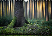 Zauberhafter Sachsenwald (Wandkalender 2019 DIN A4 quer) - Produktdetailbild 6
