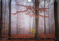 Zauberhafter Sachsenwald (Wandkalender 2019 DIN A4 quer) - Produktdetailbild 12