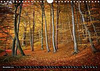 Zauberhafter Sachsenwald (Wandkalender 2019 DIN A4 quer) - Produktdetailbild 11