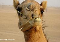 Zauberhaftes Arabien (Tischaufsteller DIN A5 quer) - Produktdetailbild 11