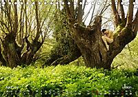 ZAUBERWALD Mystik der Natur (Tischkalender 2019 DIN A5 quer) - Produktdetailbild 4