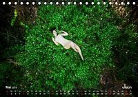 ZAUBERWALD Mystik der Natur (Tischkalender 2019 DIN A5 quer) - Produktdetailbild 5