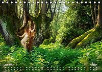 ZAUBERWALD Mystik der Natur (Tischkalender 2019 DIN A5 quer) - Produktdetailbild 7