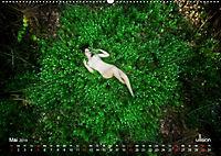 ZAUBERWALD Mystik der Natur (Wandkalender 2019 DIN A2 quer) - Produktdetailbild 5