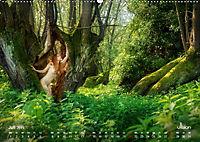 ZAUBERWALD Mystik der Natur (Wandkalender 2019 DIN A2 quer) - Produktdetailbild 7