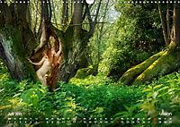 ZAUBERWALD Mystik der Natur (Wandkalender 2019 DIN A3 quer) - Produktdetailbild 7