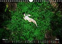 ZAUBERWALD Mystik der Natur (Wandkalender 2019 DIN A4 quer) - Produktdetailbild 5