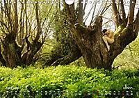 ZAUBERWALD Mystik der Natur (Wandkalender 2019 DIN A4 quer) - Produktdetailbild 4